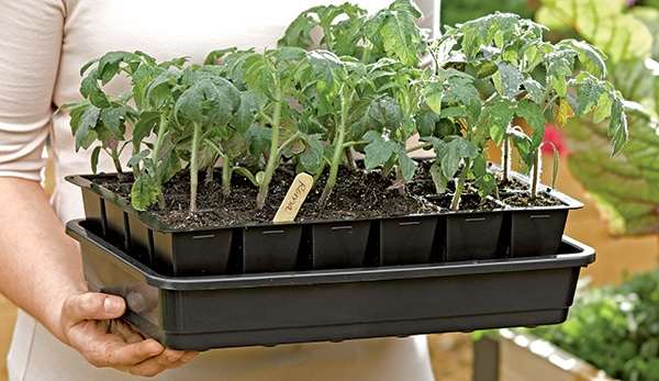 The Do's and Dont's of Growing Flowers From Seeds for the DIY Gardener